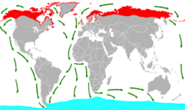 Tern Migration Map